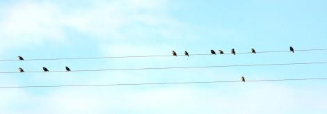 vogels-op-draad